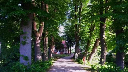 roggenhorst